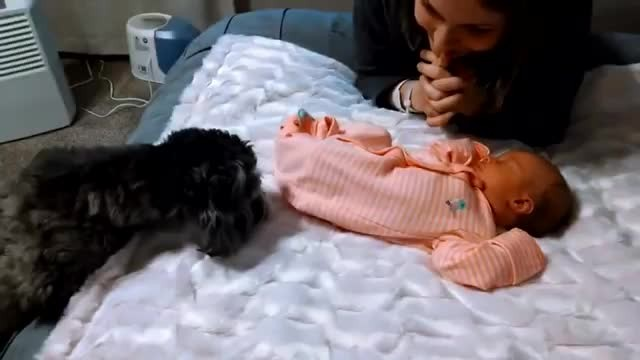 Parents call family dog in to meet newborn. They start recording the moment she enters room.