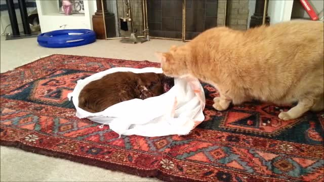 Cat tries to revive his dead friend - Rumble