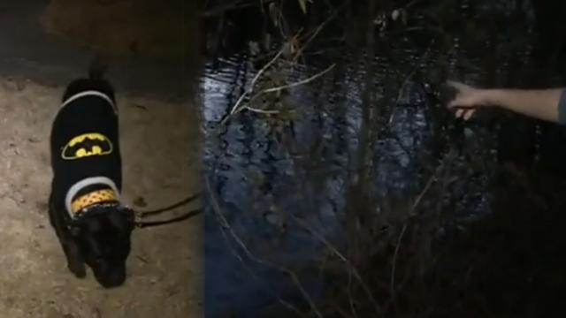 Anxious dog leads owner to a pond. Her heart stops when she sees a dark figure