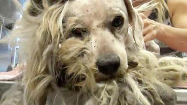 Rescued dog never wagged his tail, but thanks to a miracle, his transformation is unbelievable