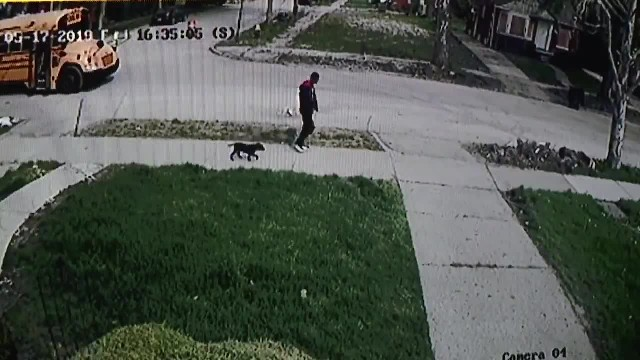 Man steals support dog from child with special needs as he is exiting school bus