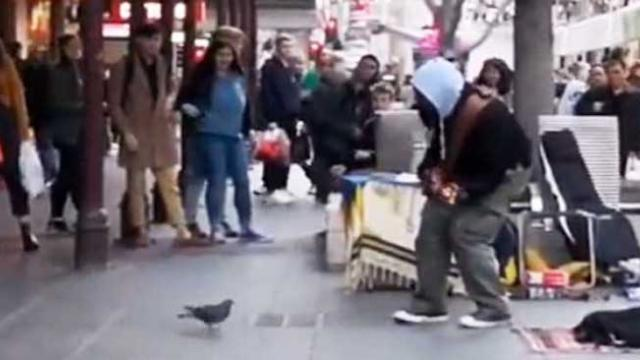 Busker can't believe it when pigeon steals show with hilarious dance moves