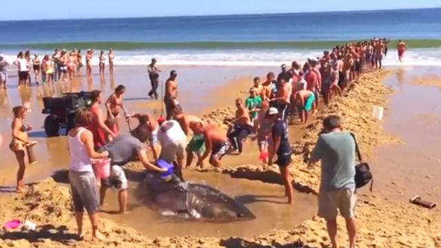 Humans saving an apex predator from death, reminding people that the animals should be appreciated a