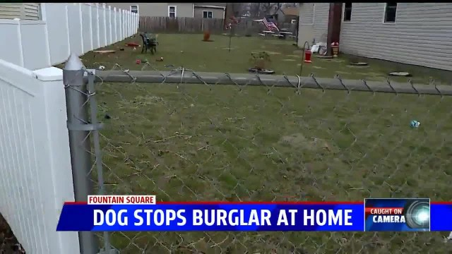 90-pound dog thwarts home intruder, scares him right into cop's hands while neighbor films