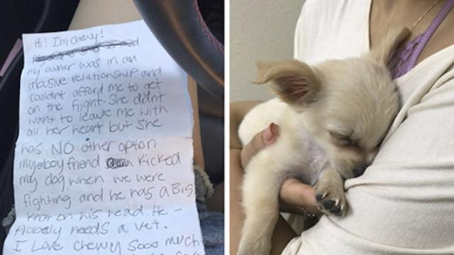 Puppy abandoned at the airport had a heartbreaking note from his owner