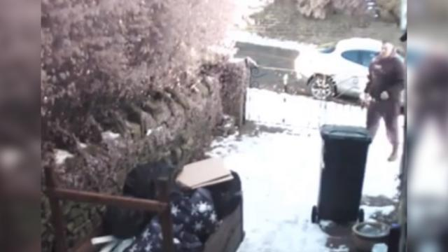 Thief stealing from yard greeted by bull mastiff and German shepherd