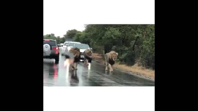Drivers stuck in traffic jam get the most incredible visitors