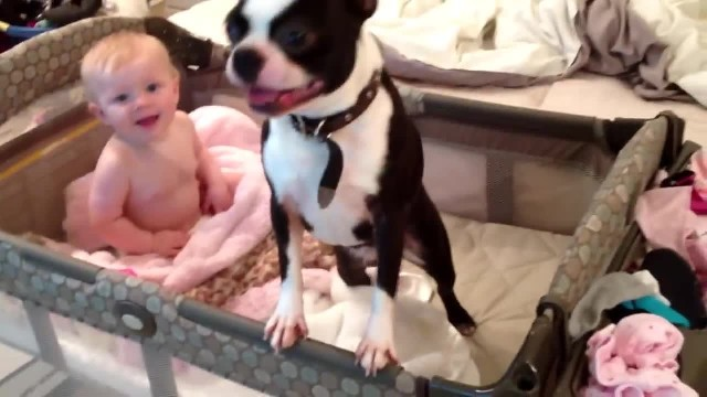 Mom begs her dog to get out of the baby's crib but then this pup acts so adorably disobedient
