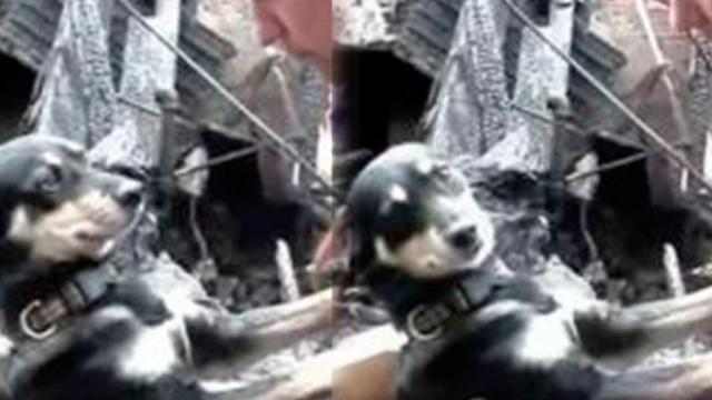 Devastated couple's home was burnt down — But watch how their dog reacts