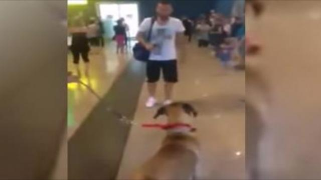 Dog stops and stares at the owner he hasn't seen in 3 years,