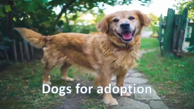 Shelter dog panics when he's given new leash - watch how he reacts when he realizes he's been adopte