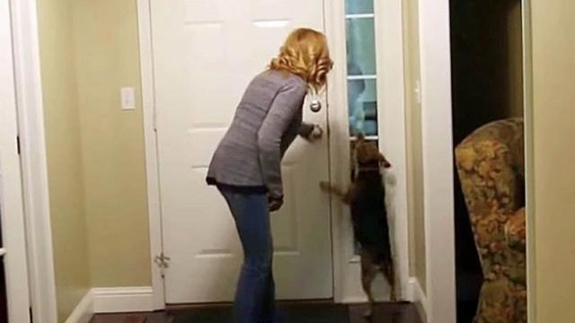 He was away for 2 yrs When the door opens, the dog's reaction