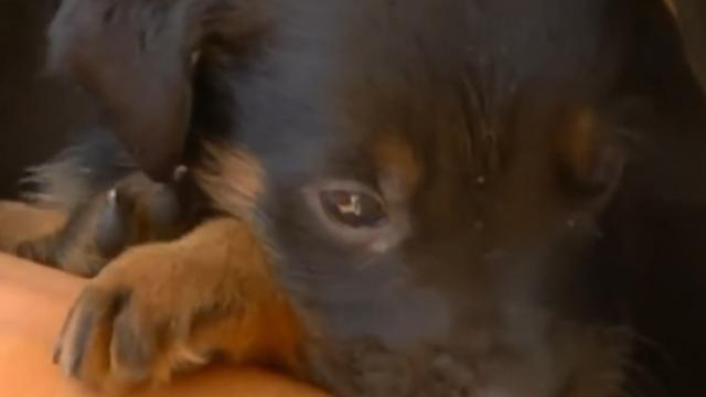 Heroic dog buries her nine puppies to save them from fire