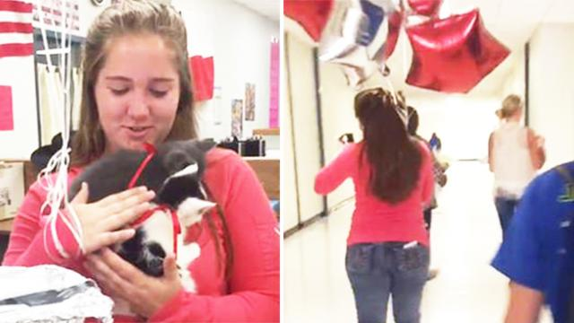 Teacher lost her 16-year-old cat, so her students surprised her with 2 rescue kittens