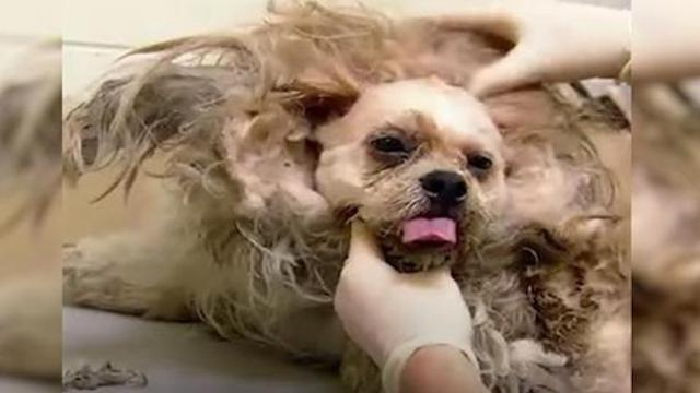 Vets are in disbelief over neglected dog's appearance stepping in to leave him unrecognizable