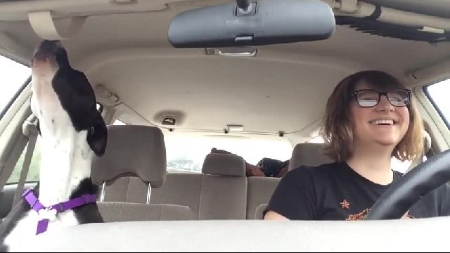 Mom And Dog Are Enjoying A Car Ride, But Things Change When Michael Jackson Starts Singing