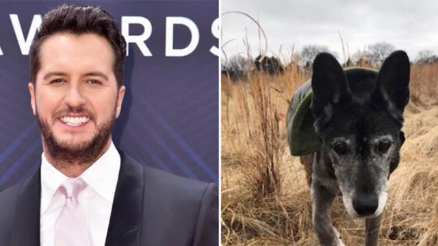 Country music star Luke Bryan adopts 18-year-old senior dog after family abandons him at shelter