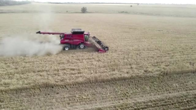 Australian wheat farmers harvest a bumper crop