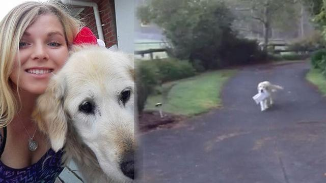 Heartwarming video of loyal dog surprising his owner by collecting the newspaper on his own takes th