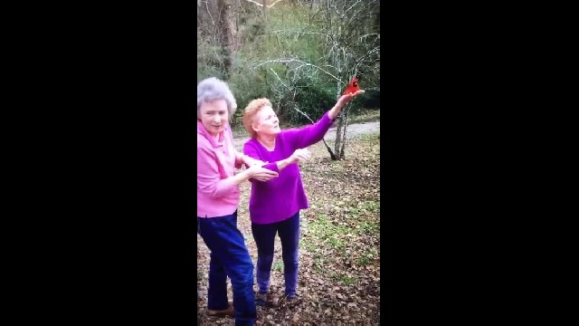 Daughters Asked Mom To Send A Cardinal When She Gets To Heaven And She Did
