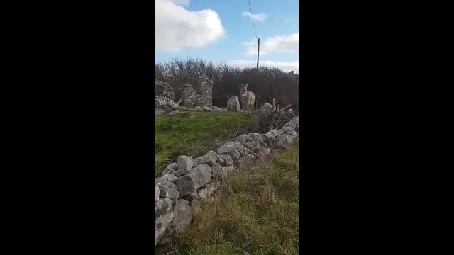 Harriet the Singing Donkey 'Serenades' Passerby