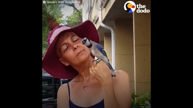 Blue Jay Brings Comfort To Woman Who Saved Him After She Gets Sick