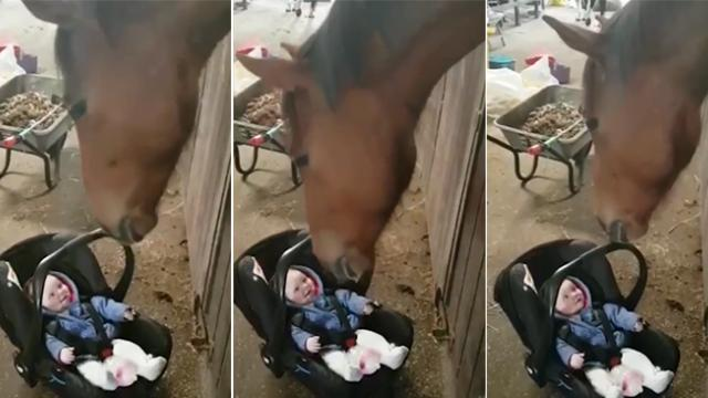 Baby starts crying in the middle of a stable and gentle horse handles with care