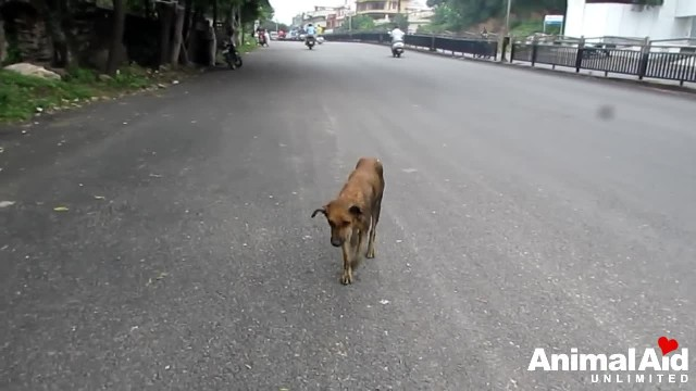Wounded and staggering in traffic dog rescued just before collapsing