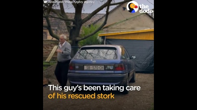 Man Does Everything For His Rescued Stork