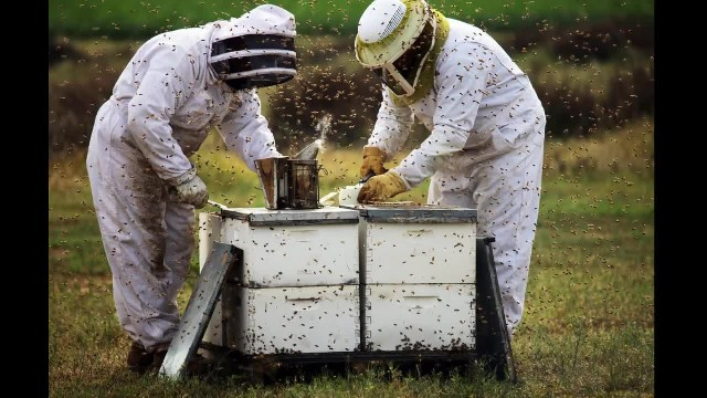 Boys Aged 12 And 13 Face 10 Years In Prison After Killing Half-A-Million Bees