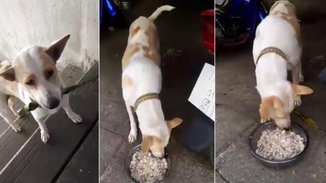 Starving pup offers leaf in exchange for meal and we can't help falling in love