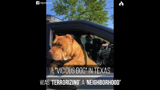 "Cop Gets A Call About A ""Vicious Pit Bull"", Ends Up Befriending The Sweetest Dog"