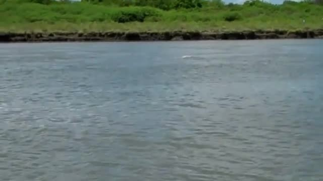 Louisiana residents captured a very rare sight, a pink dolphin swimming in the river