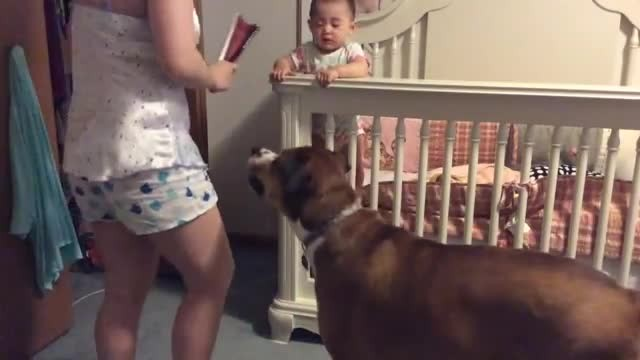 Dog protects baby from 'angry' mother during training