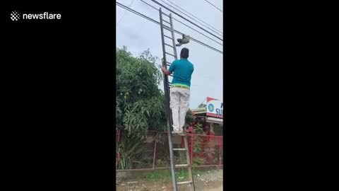Hero Tourists Form A Rescue Team To Save Helpless Sloth Before He Gets Electrocuted