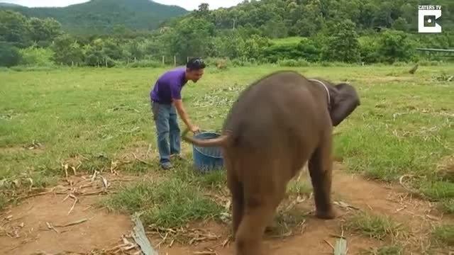 Here's your chance to hear a baby elephant giggle if you never have before