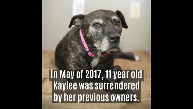 Family walks into shelter and adopts oldest dog there - One day, she lets them know it's time