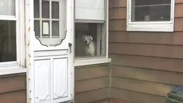 Man goes viral with the hilarious footage of his dog watching his steps