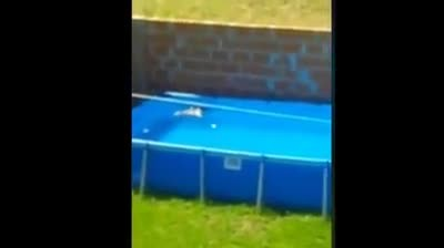 Golden retriever notices bird struggling in pool & rushes over to save its life