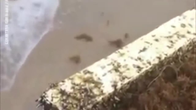 Giant Cross Covered In Barnacles Washes Onto Florida Beach, Many Calling It A 'Holy Sign