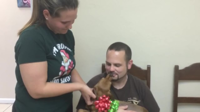 Veterinarian Helps Paralyzed Dog After Family Was Forced To Give Her Away