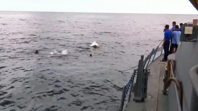 Navy confused by large mass in water but moment they recognize it they all jump overboard