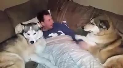 """Everytime Daddy Gives This Dog Attention The Big Pup Throws a Hysterical Temper Tantrum. """