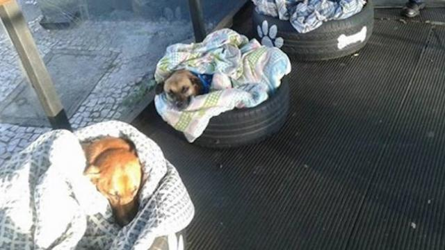 Bus station opens its door to homeless dogs and gives them special beds to protect them from winter