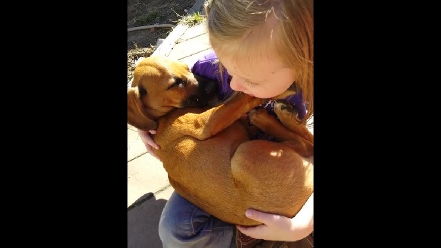 Little girl cradles newly-adopted puppy and sings him lullaby – Now watch his reaction