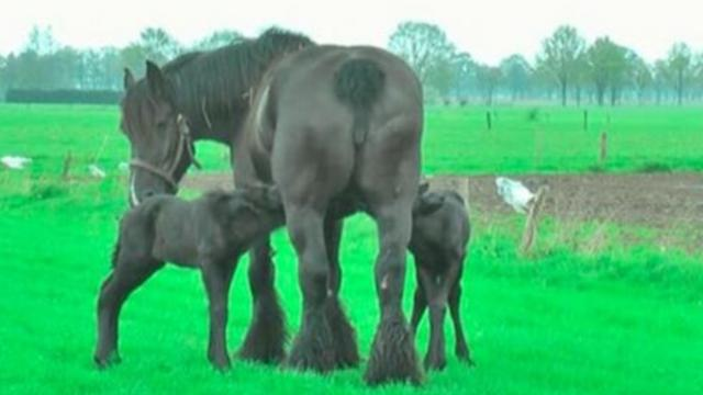 Horse delivers rare twins, days later, footage takes everyone's