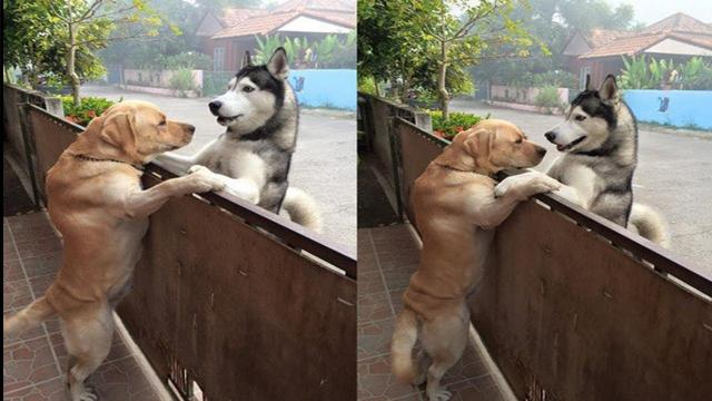 Lonely Dog Escapes Yard To Get A Hug From His Best Friend