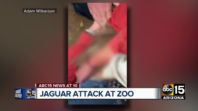Zoo Confirms It Won't Put Down Jaguar That Attacked Woman Trying To Take A Selfie