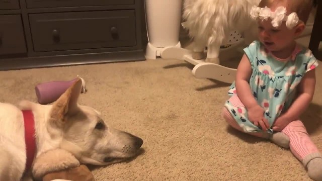 Baby girl invades dogs personal space to kiss him prompting response family didn't foresee