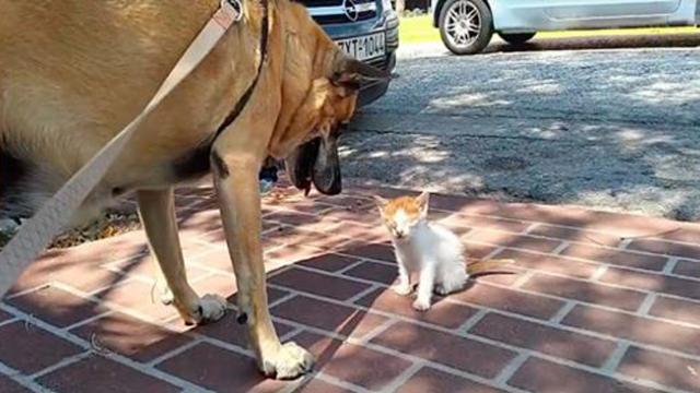 Dog doesn't leave blind kitten's side until she is rescued